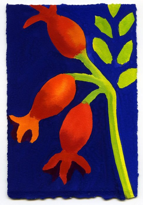 Three Rose Hips, Single Stem on Blue