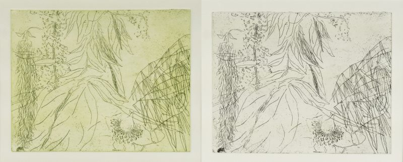 Summer Leaves V, etching by Nerys Johnson