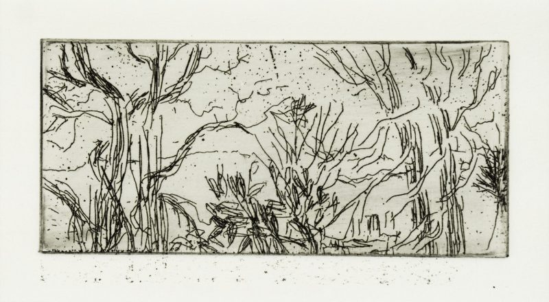 Trees in Winter, etching by Nerys Johnson